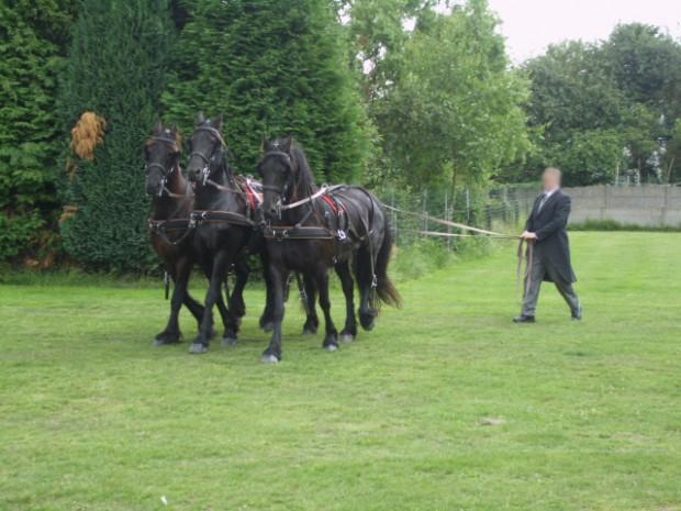 Onze-paarden-2
